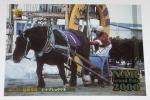 【トレカ】競馬・バンダイ・2001年・NARグランプリカード・098 シマヅショウリキ