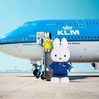 KLM オランダ航空 ミッフィー miffy ぬいぐるみ 新品未使用 グッズの画像