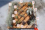 チランジア 11種類セットB ★エアープランツ Tillandsia