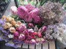 ■HANDS■ドライフラワー機械乾燥の花たち24