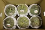 【数量4出品】 糖度16度前後!! 岡山県特産ペルルメロン 3玉入 (1玉約700~900g) 家庭用 1円スタート