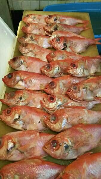 宮城県金目鯛 3キロ一箱セット11~15匹セッ。B等級冷凍品です。煮付け焼き物に!高級品の金目鯛です