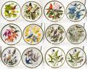 13枚 WEDGWOOD 世界の鳴き鳥フランクリンミント プレート 皿 飾り皿 花鳥