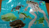 トノサマガエルとシュレーゲルアオガエルとアマガエル 全6種