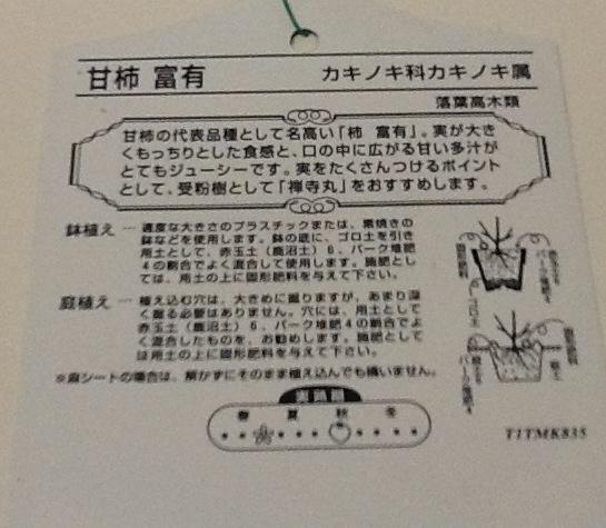 富有柿(甘柿)接続苗木_画像2