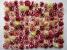 ドライフラワー ★ 貝細工 ★ 白・ピンク系120個 2.5㎝以上のサイズ 画像の物を発送します