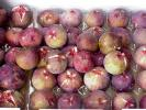 ●朝取り高糖度日本イチジク(蓬莱柿)●小玉中心バラ詰めたっぷり2.0kg(風袋込)