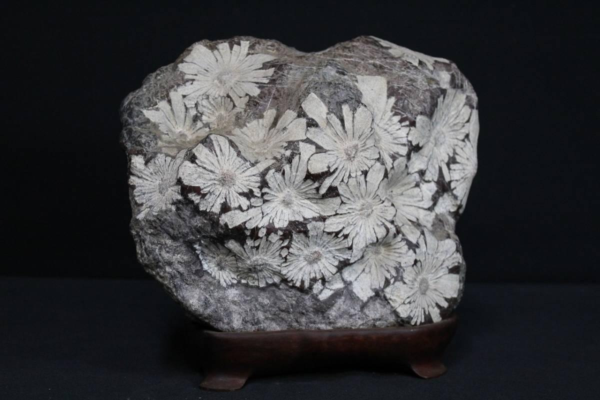 1hEX06202 菊花石 鑑賞石 水石 置物 天然石 重量約12.2kg 台座有