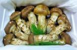 FOODISH/1円スタート 中国産 松茸 まつたけ1箱 1kg A品質 大腕つぼみ