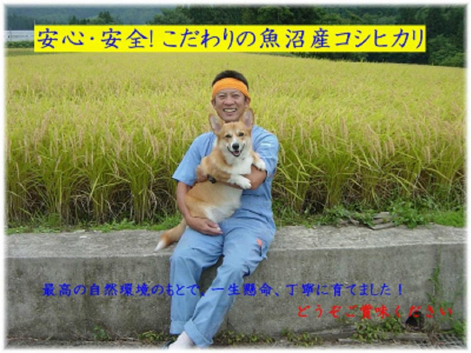 臨時出品!!特栽米!H29年産魚沼産コシヒカリ玄米30kg☆食味Sランク☆!