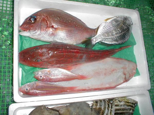【送料込み】 鮮魚お試しセット 3~4k 【激安】 _画像2