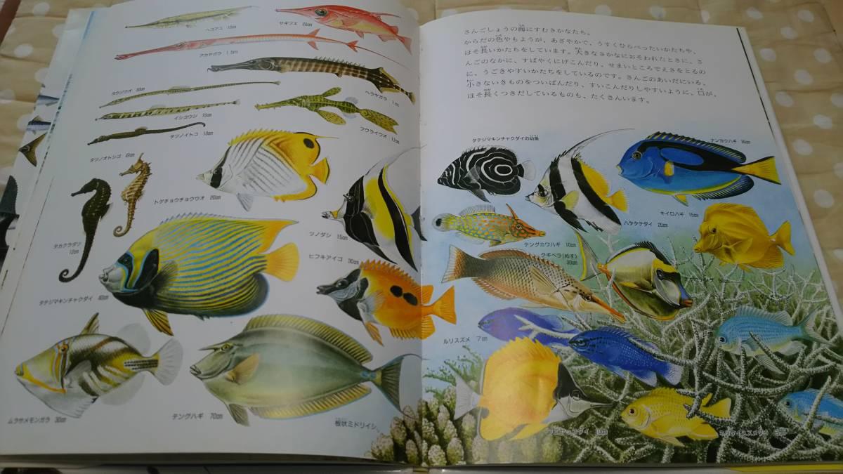 ☆定価1400円☆ 絵本 図鑑 海のさかな 魚_画像2