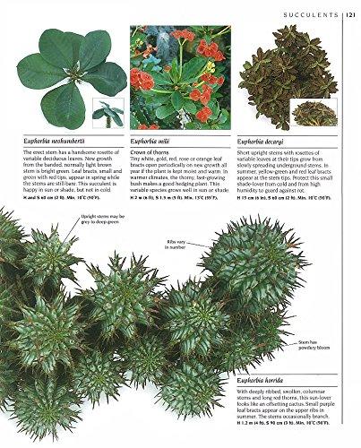 洋書【サボテンと多肉植物の完全本/ The Complete Book of Cacti & Succulents (輸入品)】_画像3