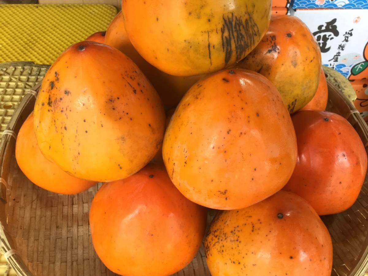 柿の王様 八幡浜名産・富士柿 5kg 柿のマンゴー!_画像2