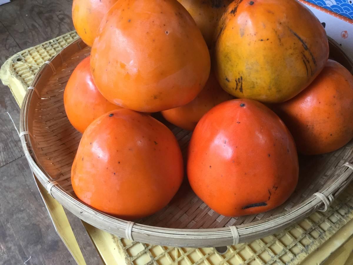 柿の王様 八幡浜名産・富士柿 5kg 柿のマンゴー!_画像10