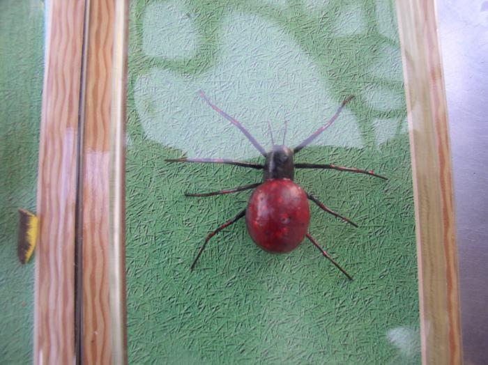 ★手作りのリアル昆虫ワールド  スズムシ・モンキチョウ・クモ の3セット_画像4