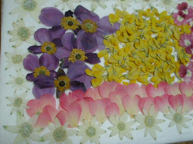♪♪押し花素材・材料♪ フランネルフラワー ミニバラなど お花色々  ♪_画像2