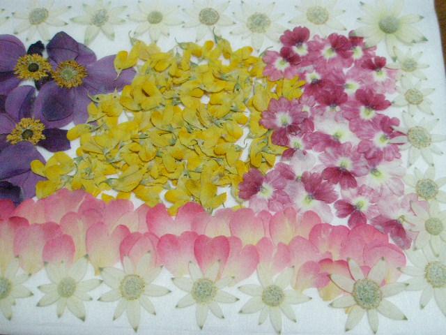 ♪♪押し花素材・材料♪ フランネルフラワー ミニバラなど お花色々  ♪_画像3