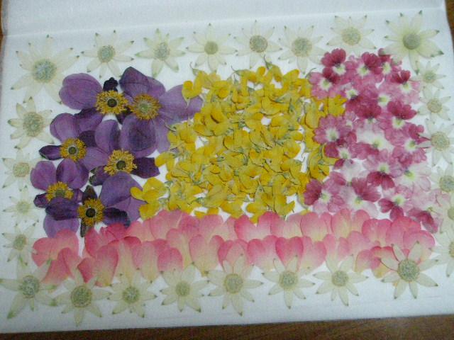 ♪♪押し花素材・材料♪ フランネルフラワー ミニバラなど お花色々  ♪