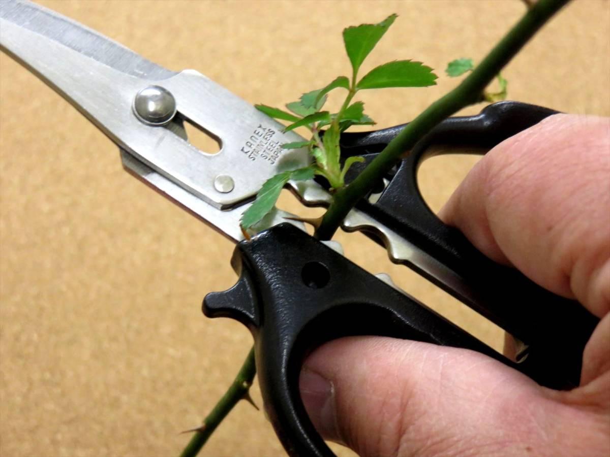 関の刃物 花切専用はさみ 黒 濃州兼松作 花切かれず ステンレス 茎の導管がつぶれにくく水の吸い上げが良い 切り花が長持ち 日本製_画像7