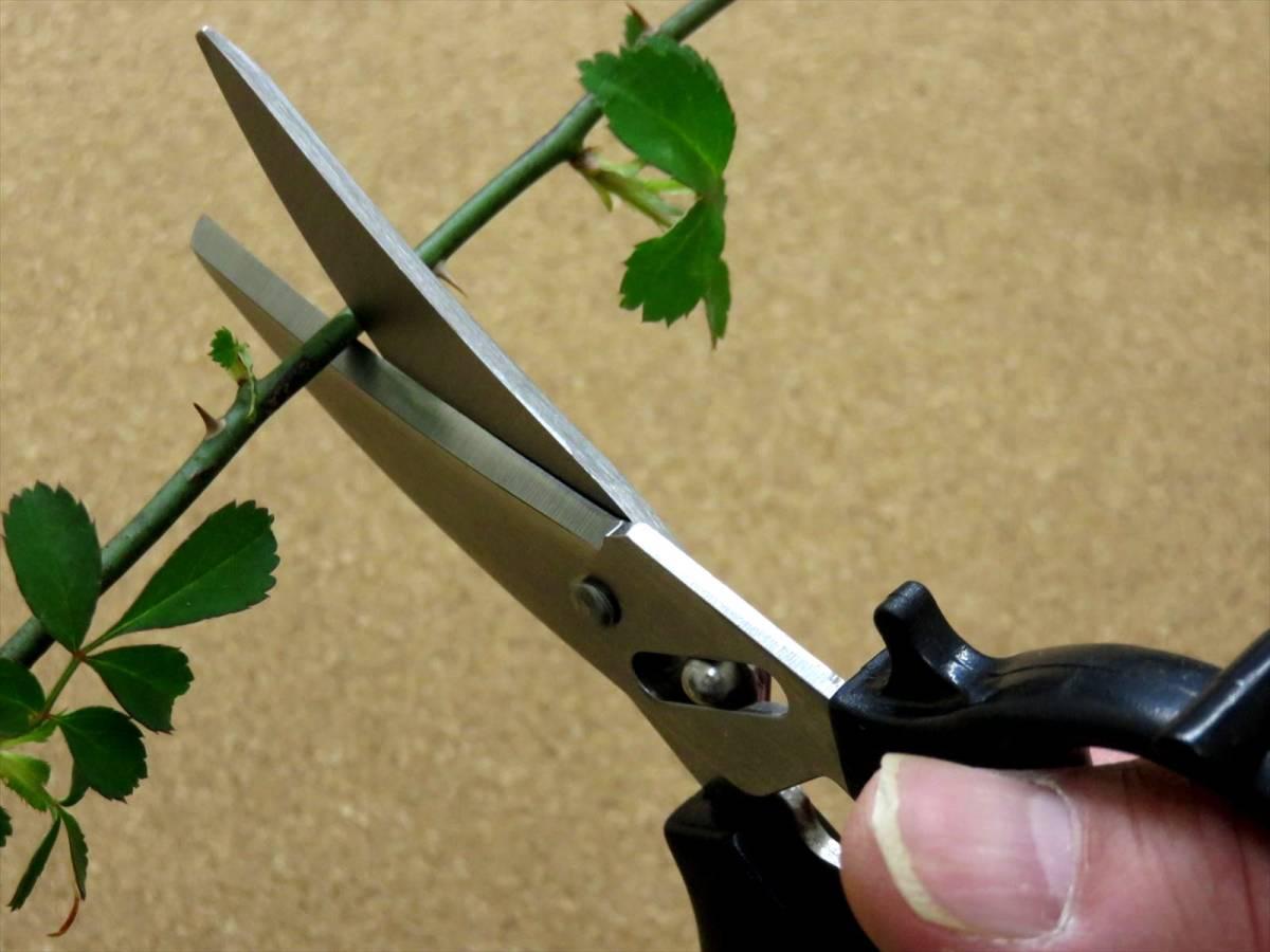 関の刃物 花切専用はさみ 黒 濃州兼松作 花切かれず ステンレス 茎の導管がつぶれにくく水の吸い上げが良い 切り花が長持ち 日本製_画像6