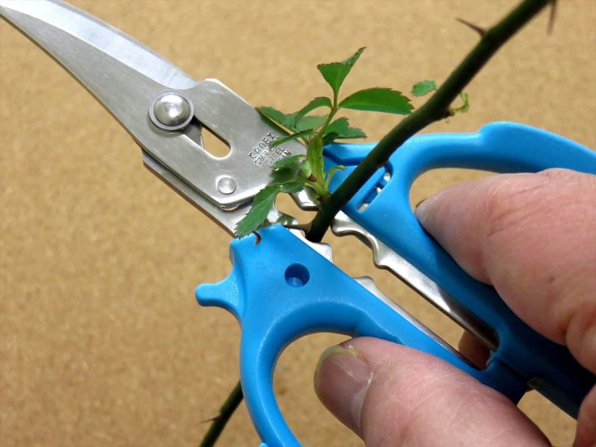関の刃物 花切専用はさみ 青 濃州兼松作 花切かれず ステンレス 茎の導管がつぶれにくく水の吸い上げが良い 切り花が長持ち 日本製_画像7