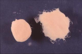 歯科技工 陶材築盛駅 ミサキカラー・カラレス 250ml 透明 ポーセレン ジルコニア トラブル回避 粘性アップの効果 盛りやすい_左 陶材が求まります。