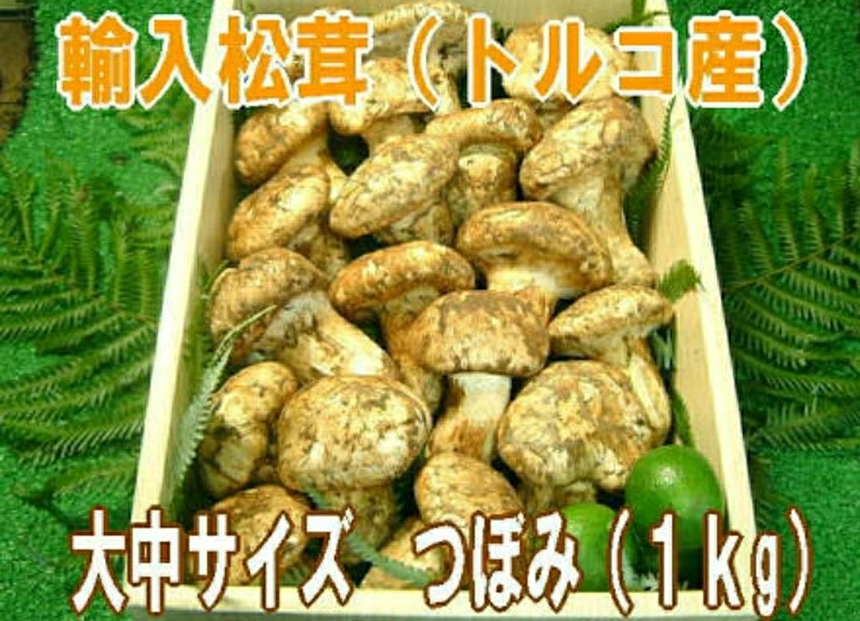 トルコ産松茸 白松茸 薫り食感とも抜群です