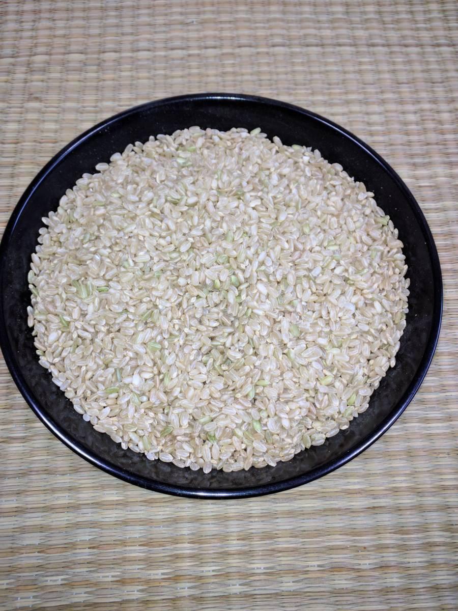 お徳かも? 訳あり?  家計応援価格 コシヒカリ中米 玄米30kgです。