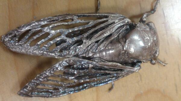 セミ 蝉 昆虫 銀細工 純銀 自在置物 年代不明 添配 盆景 リアル