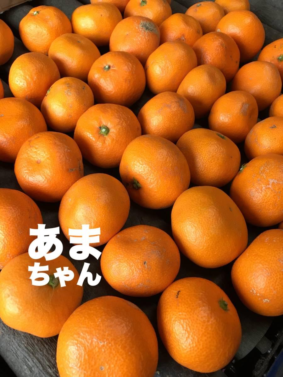 4/小玉10K・しもつ蔵貯蔵みかん・あまちゃんこみかん・送料箱代無料