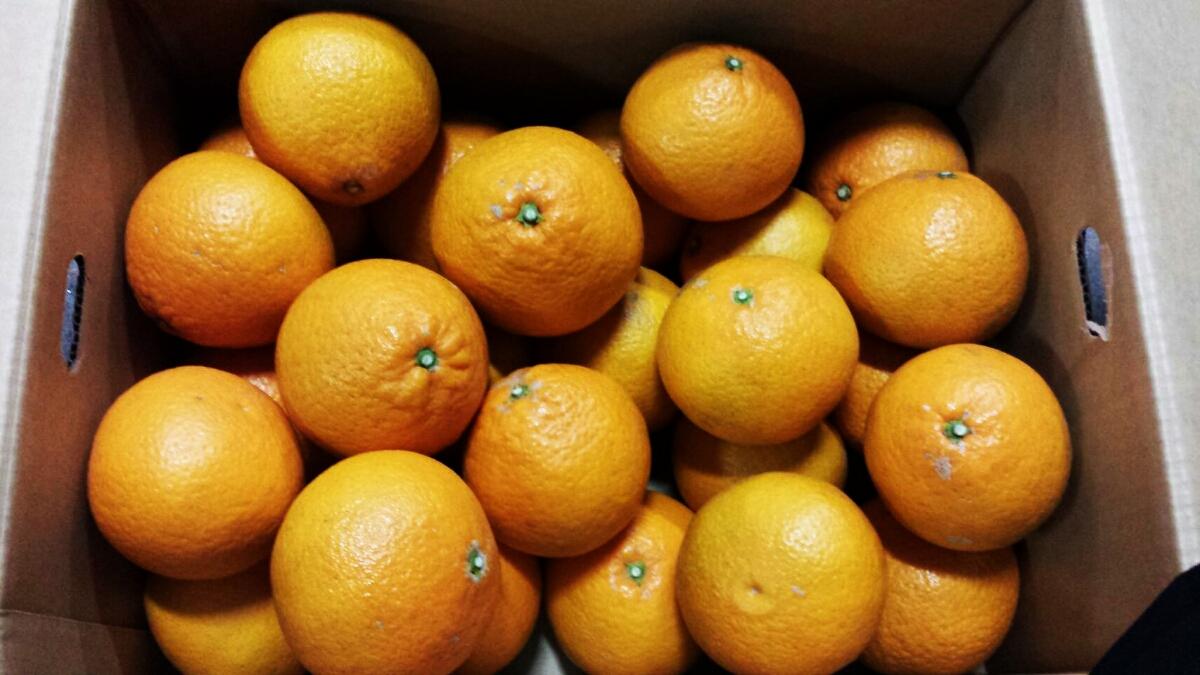 熊本産、清見 タンゴールオレンジ 秀品 10kg