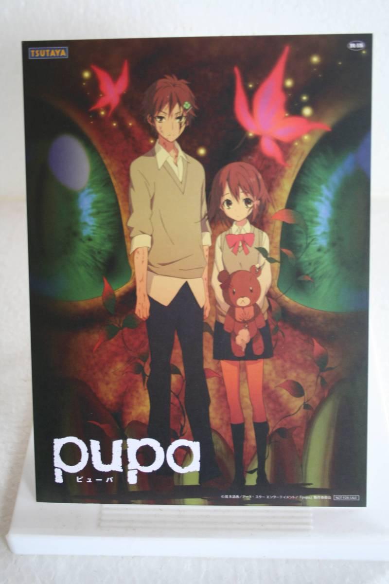 ツタヤカレンダー pupa(ピューパ)_画像2