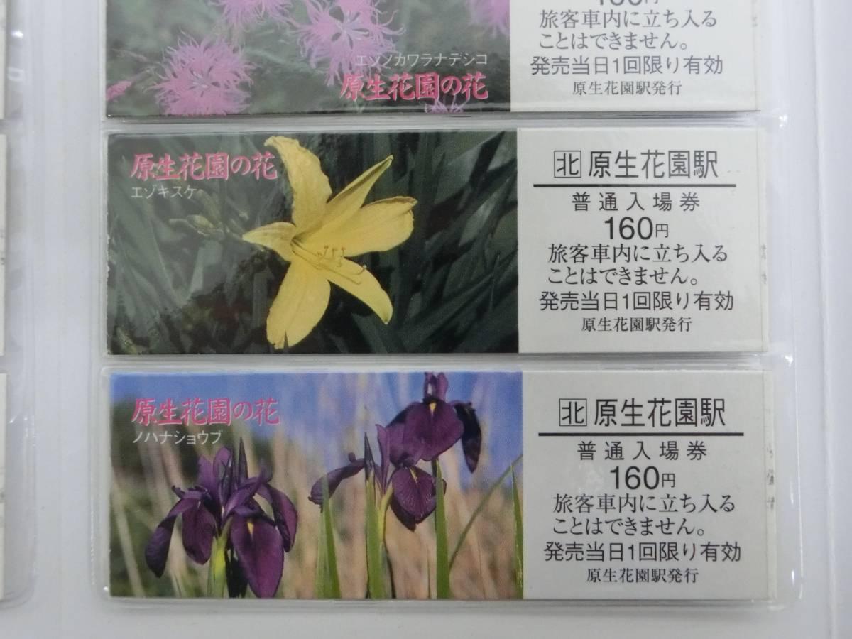 JR北海道 原生花園の花 切符 硬券 入場券_画像5