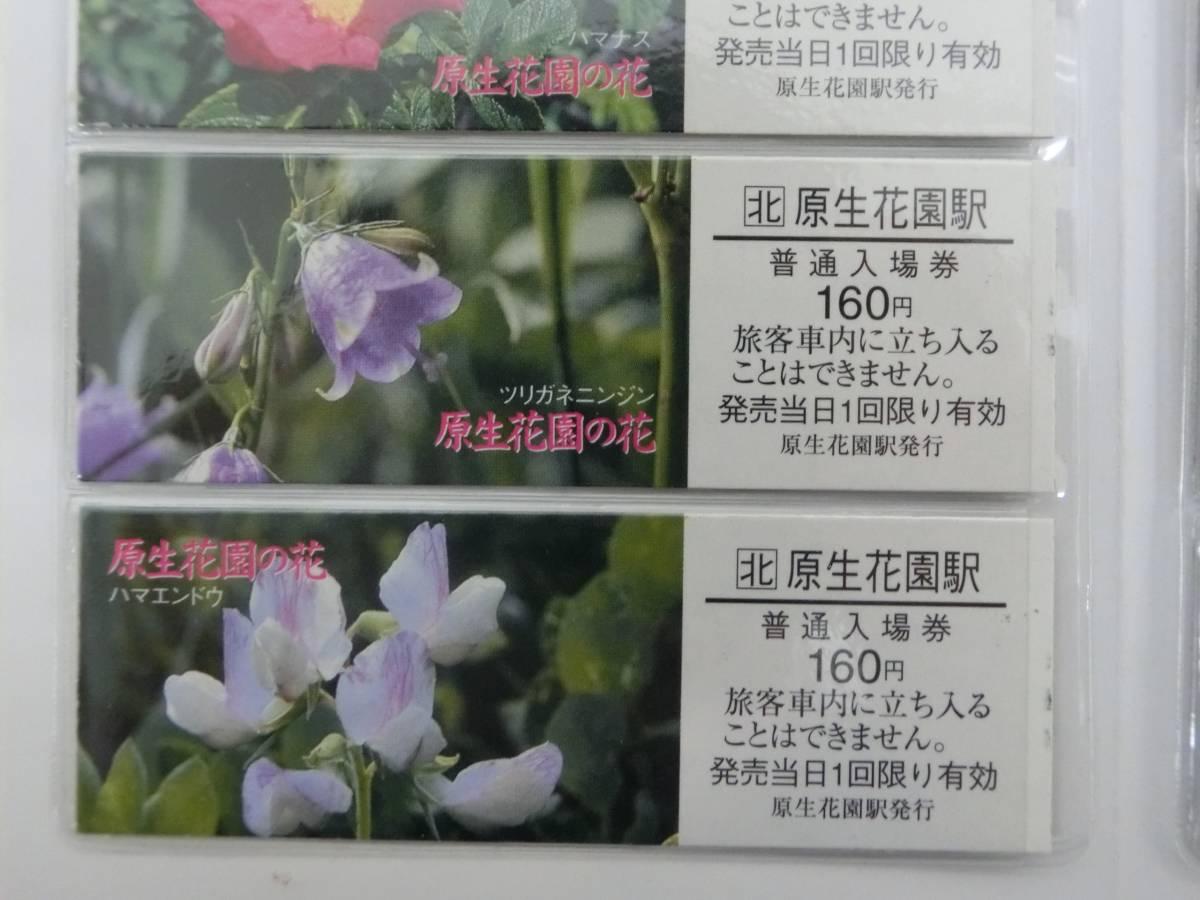 JR北海道 原生花園の花 切符 硬券 入場券_画像7
