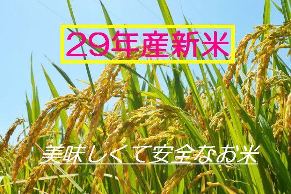うまい米はブランドじゃなく生産者で選ぶ 29年 無農薬 無化学肥料で玄米食に最適! てんこもり イセヒカリ から選べる☆