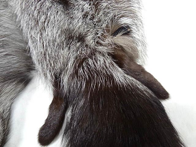 年代 不明 希少 フォックス リアル ファー ストール 首巻き ショール マフラー 狐 レア 毛皮 アニマル ビンテージ 男女着用可能 白 茶 黒_画像4