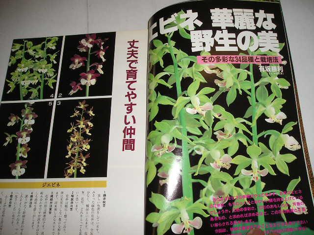 『園芸ガイド』 1984春号  昭和59年主婦の友社刊_画像3