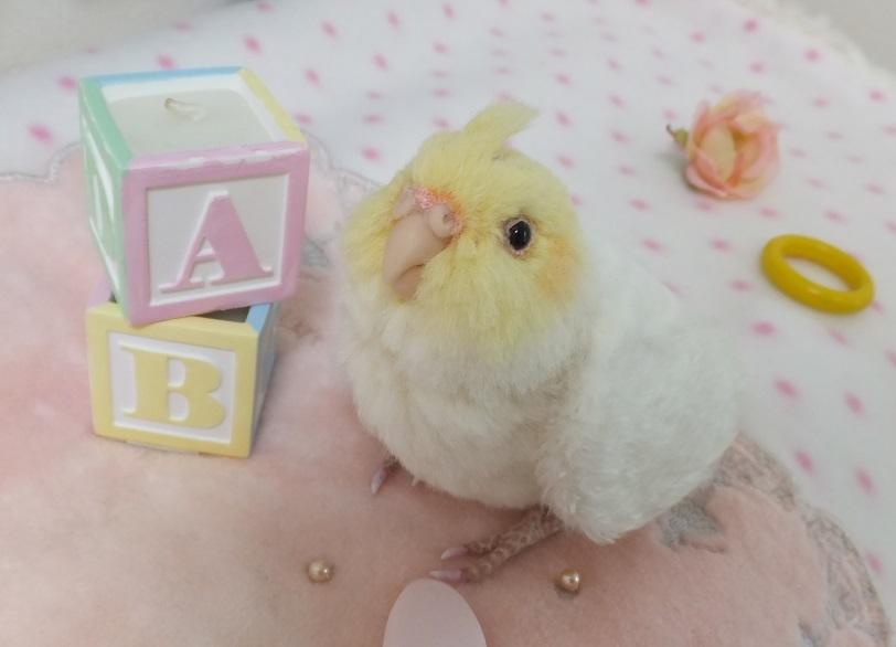 ベビー☆オカメインコ ふぅわふわ&おしりペタン♪ アトリエプリュムオリジナルバードフィギュア _画像4