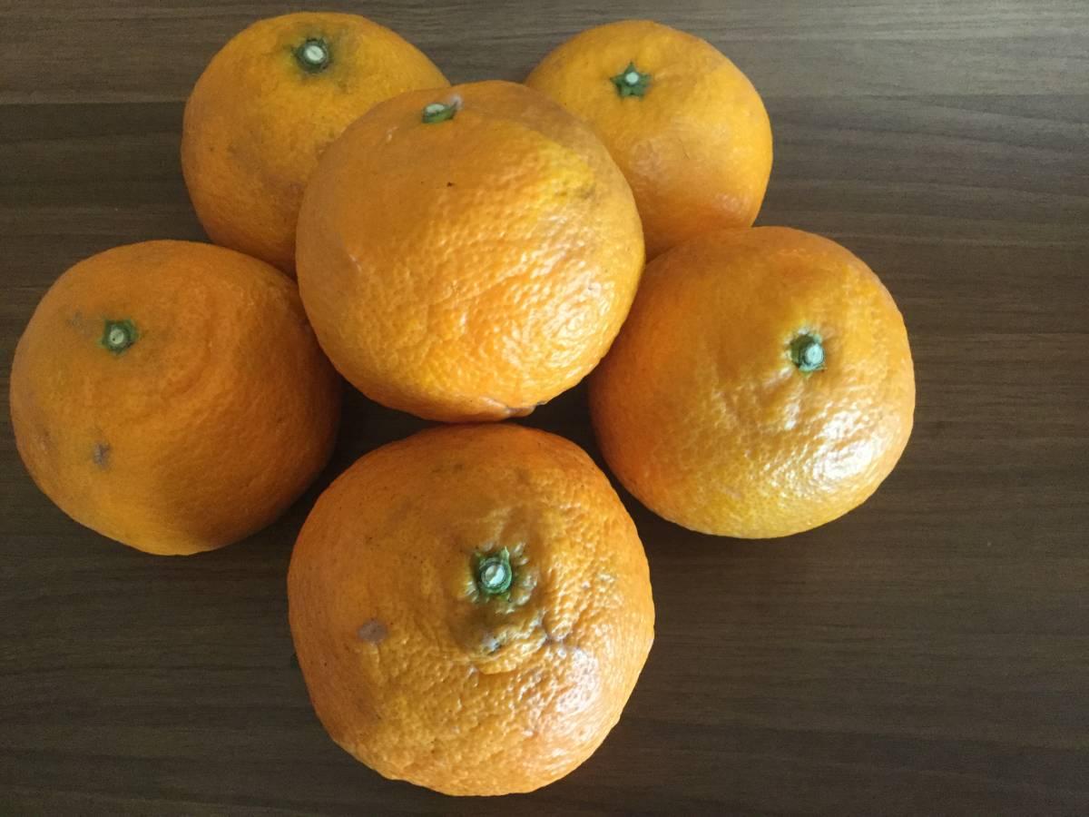 ゆみ農園 愛媛の柑橘3品セット 10㎏_画像2