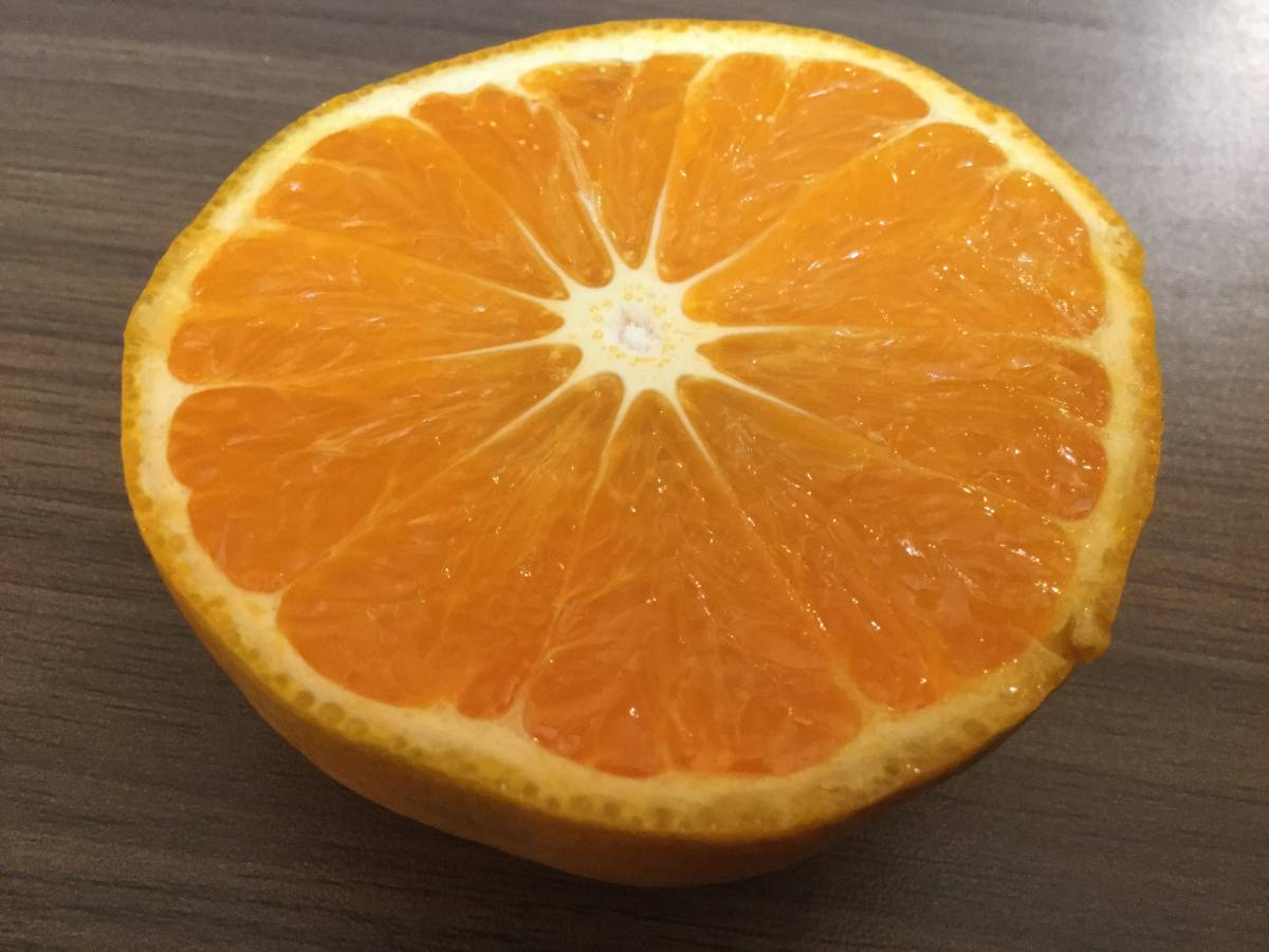ゆみ農園 愛媛の柑橘3品セット 10㎏_画像3