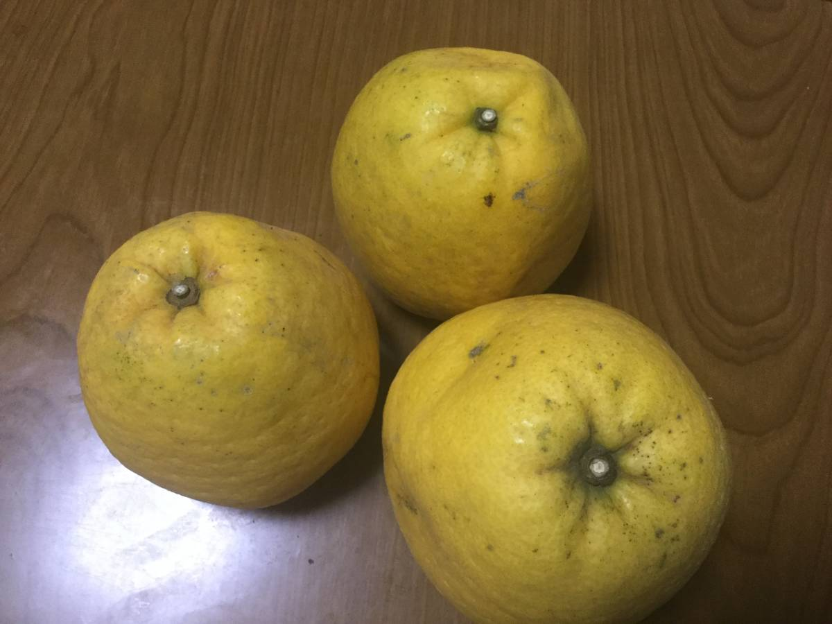 ゆみ農園 愛媛の柑橘3品セット 10㎏_画像4