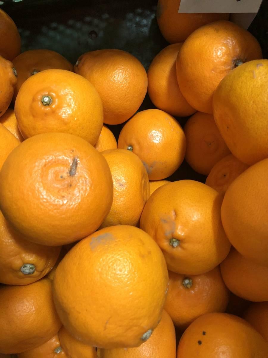 ゆみ農園 愛媛の柑橘3品セット 10㎏