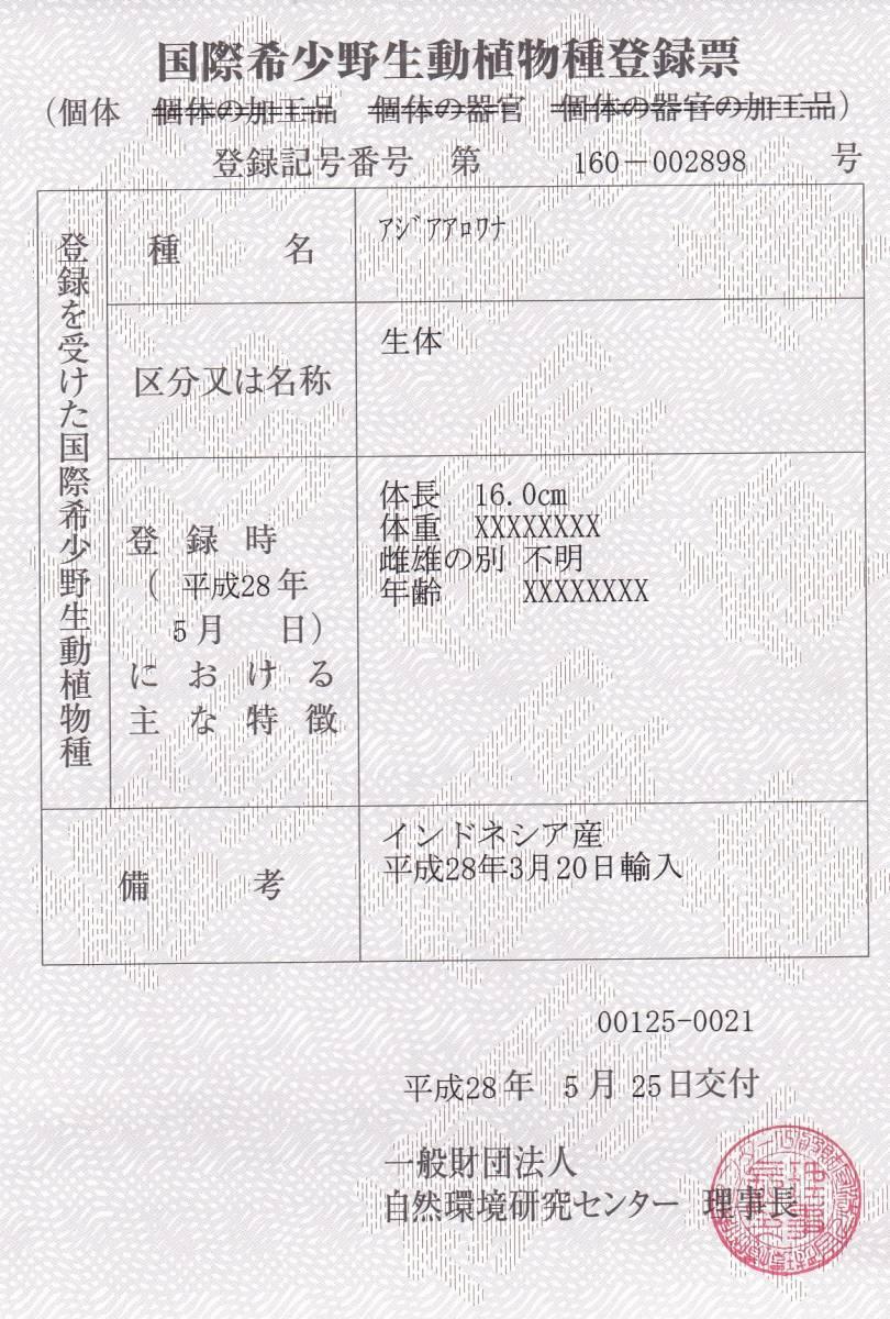 売切り1円スタート☆下取り個体☆神龍_画像3