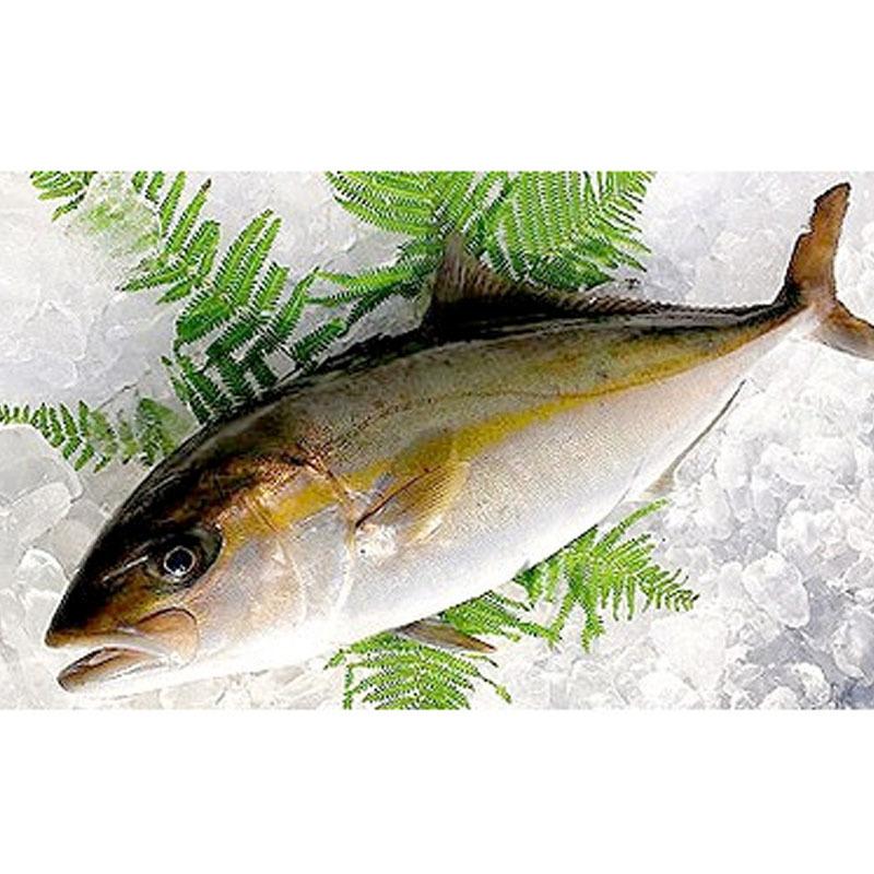 鮮魚 国産カンパチ(3~3.5kg) ★築地_画像1