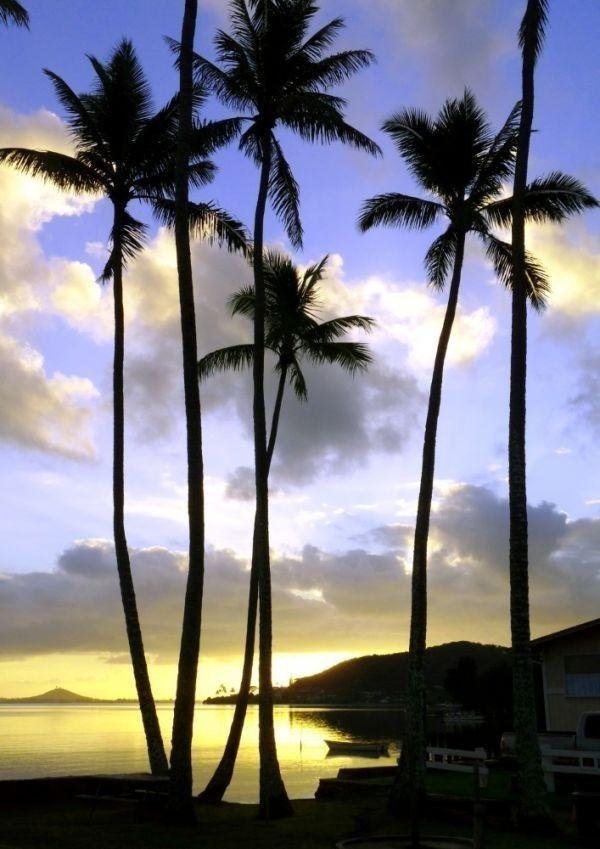 ハワイ オアフ島の夜明けとパームツリー サンライズ ヤシの木 海 絵画風 壁紙ポスター 特大A1版585×830mm(はがせるシール式)036A1 印刷物&ポスター&科学、自然