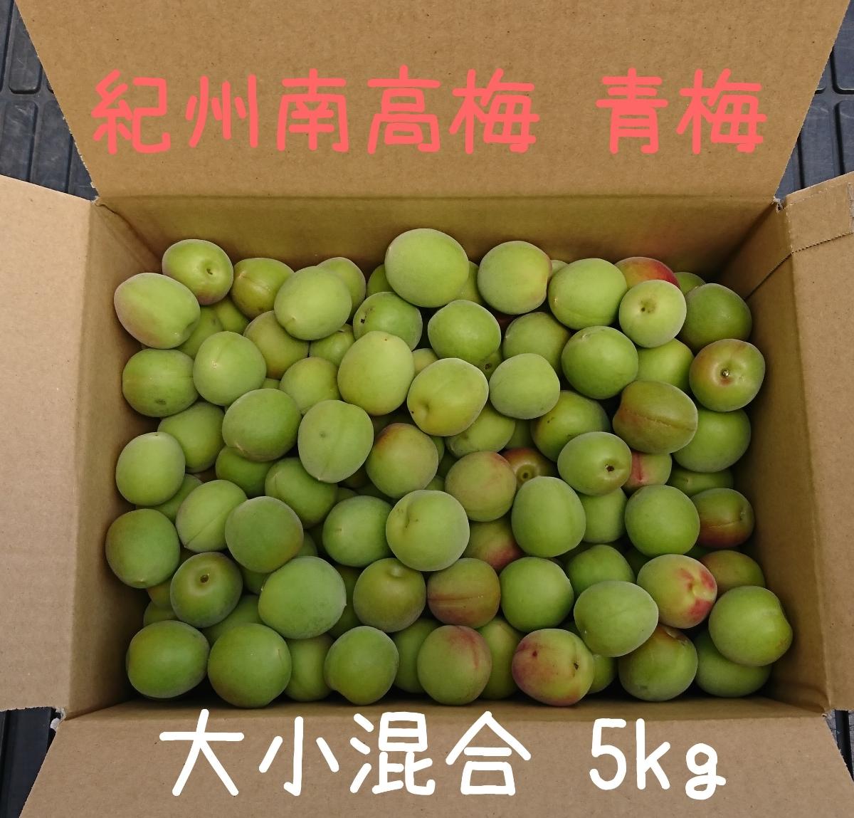 6月9日収穫発送 紀州南高梅 青梅 5kg 大小混合 和歌山県みなべ町産 梅酒、梅ジュースに!