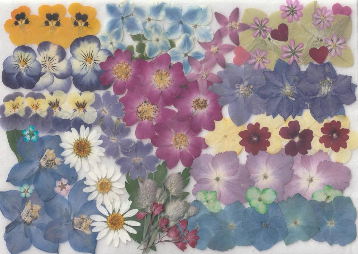 押し花素材 [  お花いろいろ ]  ミニバラ・アジサイ・ビオラ他