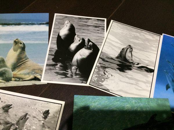 最終閉店処分!ビンテージポストカード 可愛い愛らしいイルカとアシカ,アザラシ? 18点_画像9