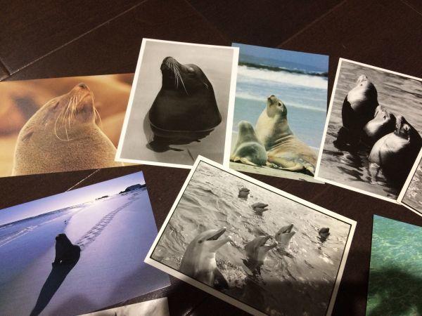 最終閉店処分!ビンテージポストカード 可愛い愛らしいイルカとアシカ,アザラシ? 18点_画像2